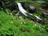 alltheportal-net_wildflowers-and-cool-waters-mount-adams-washin.jpg